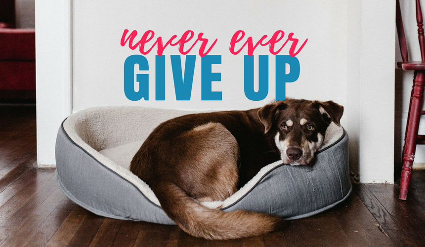 Why it's important to never, ever give up