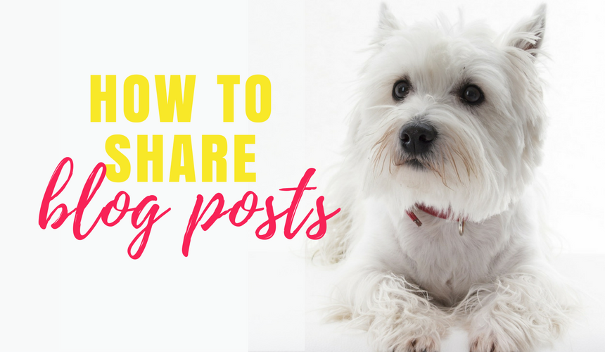 How to re-share your blogs on other websites (to reach a wider audience)