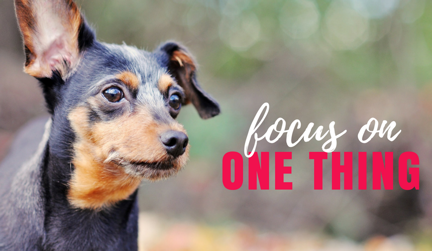 Focus on ONE Thing