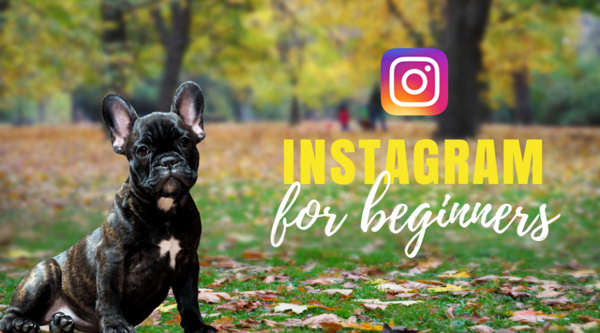 Beginners Guide to Instagram – for small business owners
